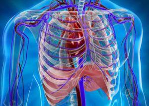 КТ органов грудной полости (легкие, средостение, грудная клетка)
